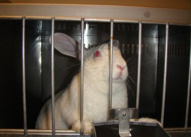 PETA and Other Animal Groups Collaborate as EU Cosmetics Animal Test Ban Is Being Destroyed