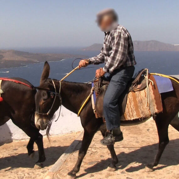 Suffering of Donkeys and Mules on Santorini Continues – Help Them Now!