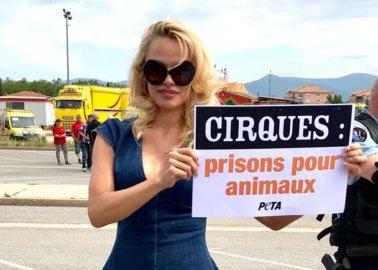 Paris to Say Au Revoir to Wild-Animal Circuses