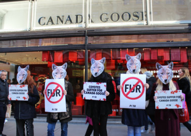 Don't Be Fooled by Canada Goose's New Fur Policy
