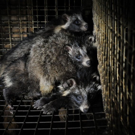 House of Fraser Is Selling Fur AGAIN: Take Action Now