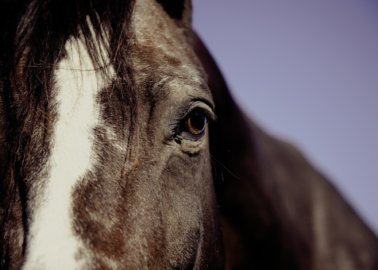 Horse Whipping Cruelty: PETA Australia Files Criminal Charges