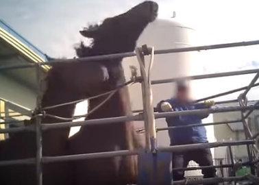How Racing Hurts Horses