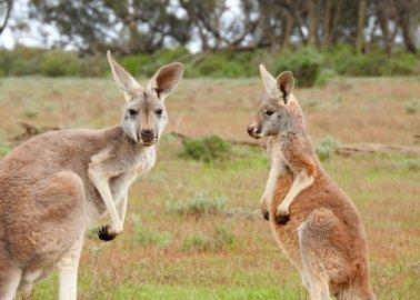 Paul Smith Confirms Kangaroo-Skin Ban