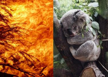 Australian Bushfires: How You Can Help Animals