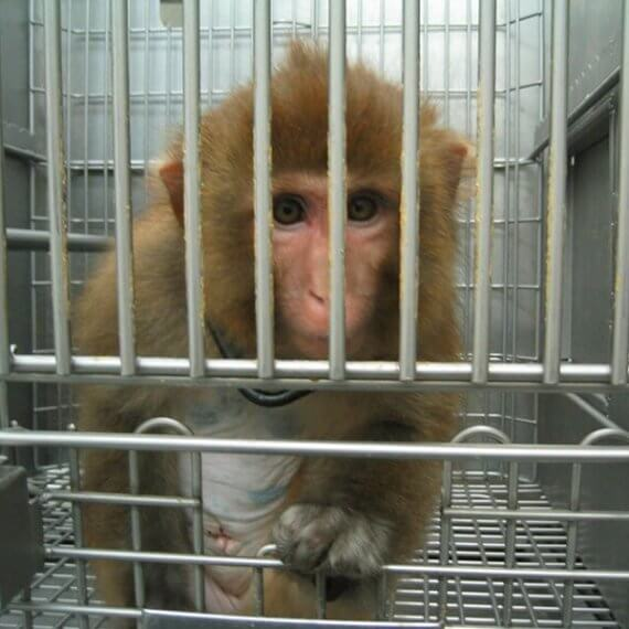 Urge Your MP to Support a Ban on Animal Testing