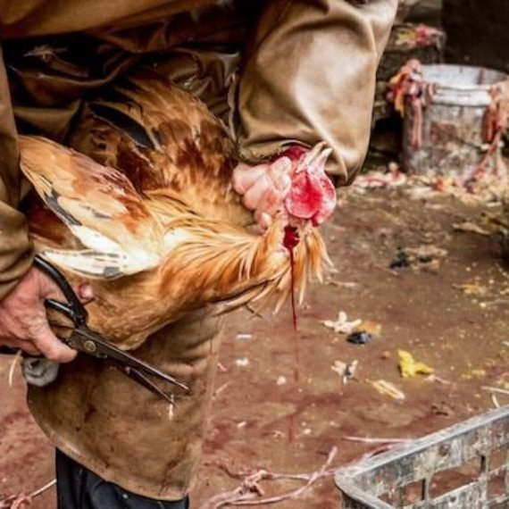 COVID-19: Ask Health Officials To Close Cruel and Deadly Live-Animal Markets
