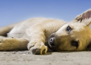 Taking Care of Dogs and Cats During Self-Isolation