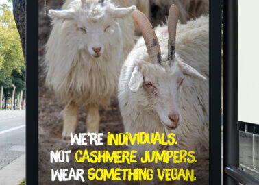 Which PETA Ad Will Soon Appear in Welsh Goats' Town?