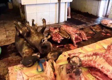 VIDEO: PETA Asia Goes Inside 'Wet Markets', Where Diseases Like COVID-19 Originate