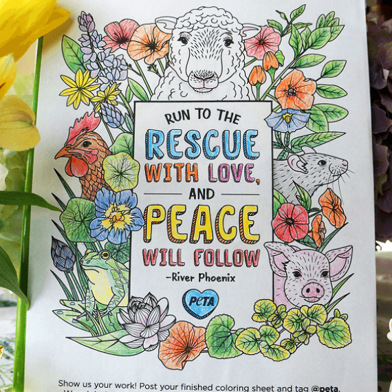 Self-Isolation Activity: Get Crafty and Fight Speciesism With These PETA Colouring Pages
