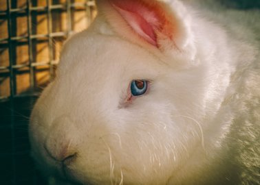 PETA Urges MPs to Protect UK Ban on Animal Testing for Cosmetics