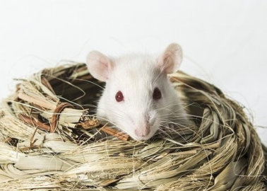 COVID-19 Researchers Avoid Archaic Tests on Animals