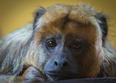 COVID-19: An Opportunity for Animals Imprisoned in UK Zoos