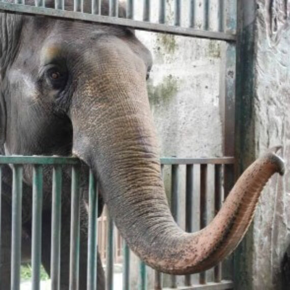 Lockdown for Life: Take Action for Animals in Captivity