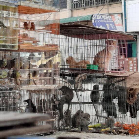 Filthy 'Wet Markets' Still Peddling Animals and Flesh Despite COVID-19