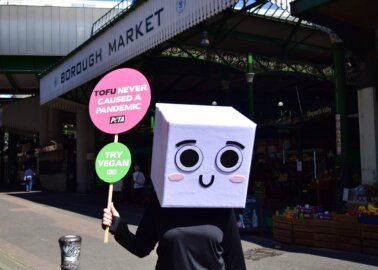 Why Did This Block of Tofu Dance Outside London's Borough Market?