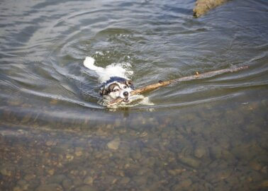 How to Protect Dogs During a Heatwave