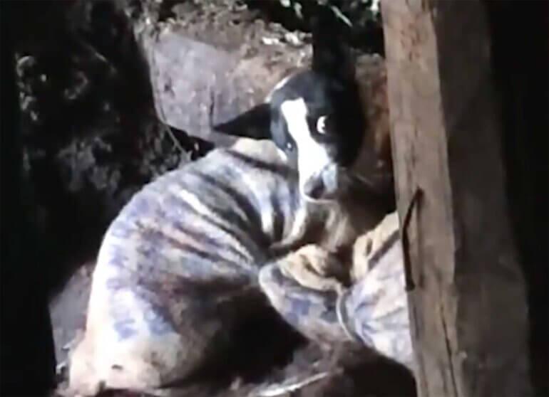 Image shows dog