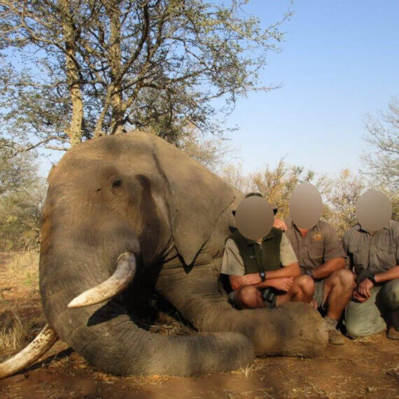 Urge Boris Johnson to Ban All Imports of Hunting Trophies