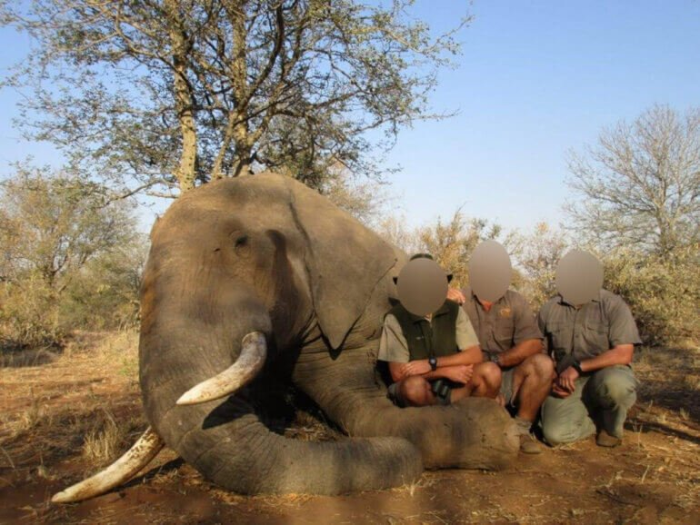Image shows hunters posing with dead elephant