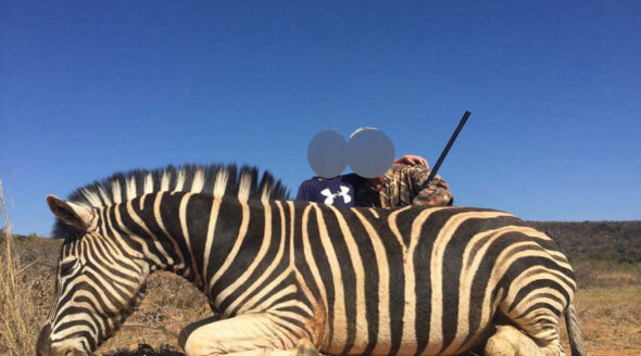 Image shows hunters with zebra