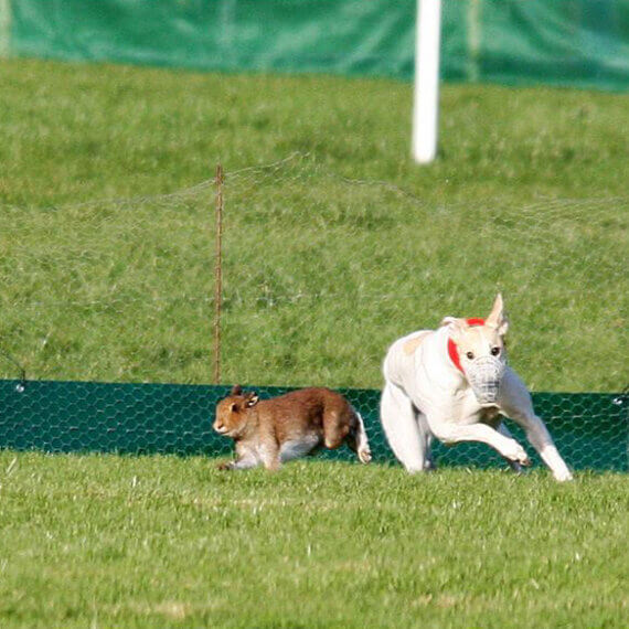 Tell the Irish Government to Stop Cruel Hare Coursing