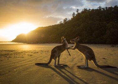 Prada Bans Kangaroo Leather!