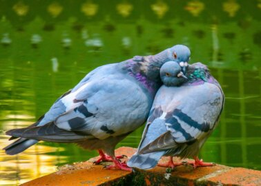 7 Things You Never Knew About Pigeons