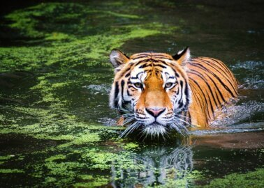 Great News! PETA US Rescues 22 Big Cats From 'Tiger King' Villain Tim Stark and Wildlife in Need