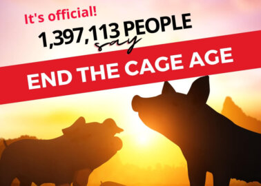#EndTheCageAge Update: 1,397,113 Signatures Handed In to European Commission