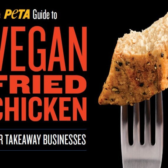 Download PETA's Free 'Guide to Vegan Fried Chicken for Takeaway Businesses'
