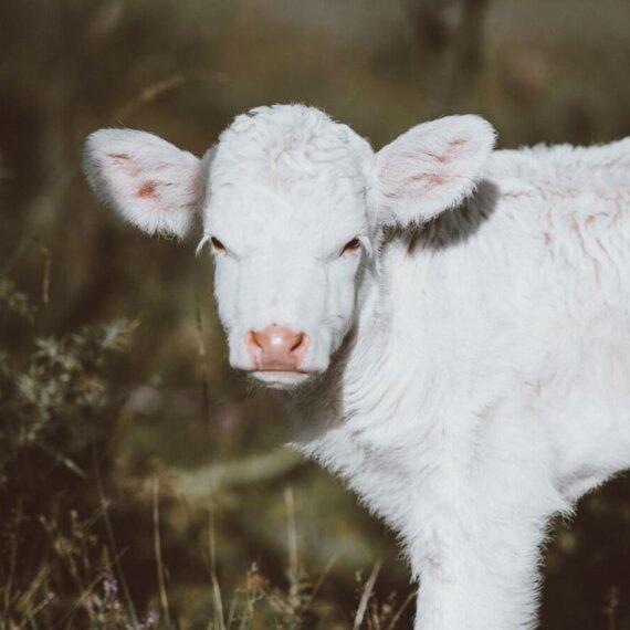 7 Reasons to Go Vegan During Lockdown