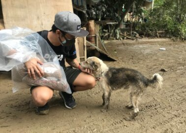 PETA Asia Rescues Animals Affected by Typhoon Vamco