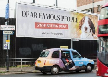 London Billboard Urges Celebs to Stop Fuelling Homeless-Animal Crisis