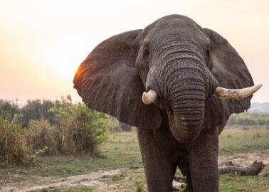 More British Travel Providers Drop SeaWorld and Elephant Rides