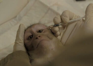 World Monkey Day: 114,884 Supporters of PETA Affiliates Speak Up for Monkeys at Europe's Largest Primate Research Lab
