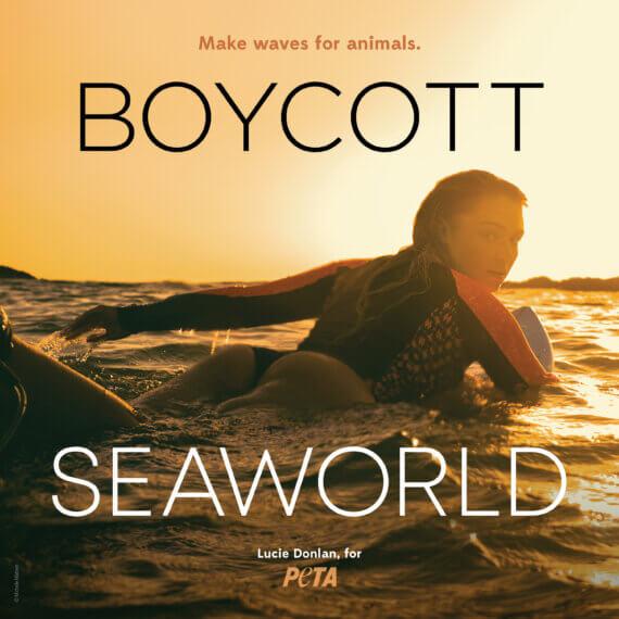 Lucie Donlan Slams SeaWorld