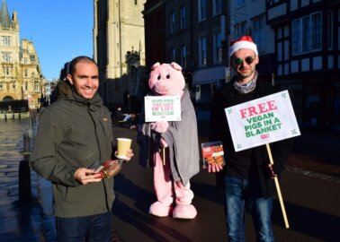 Christmas Come Early: A 'Pig in Blankets' Spreads Joy in Cambridge