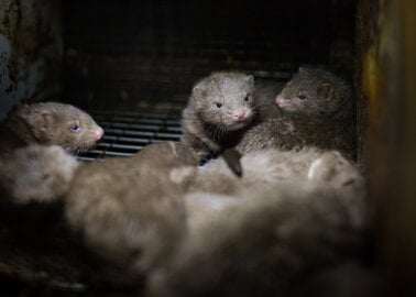 The Fashion Awards 2020: 77,000 PETA Supporters Speak Out Against Fur
