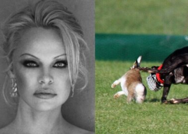 Pamela Anderson Urges Irish Prime Minister: Cut the Cord on Hare Coursing
