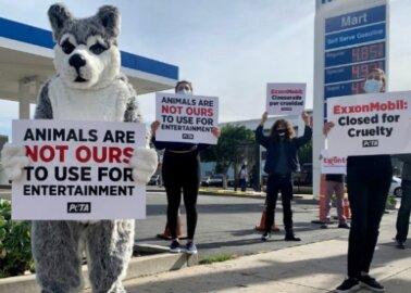 Great News: ExxonMobil Cuts Ties With Iditarod Dog-Sled Race!