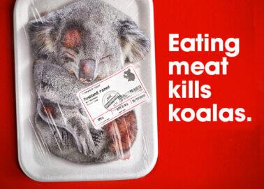 Is Eating Meat Killing Koalas?