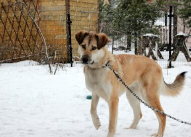 Here's How You Can Help Homeless Animals in Romania This Winter