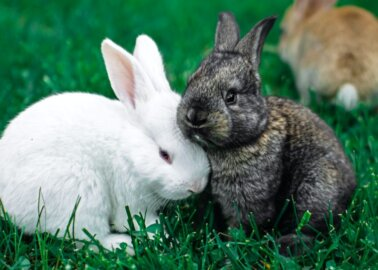 India Is Strengthening Its Anti–Animal Testing Legislation – Why Is the EU Still Behind?