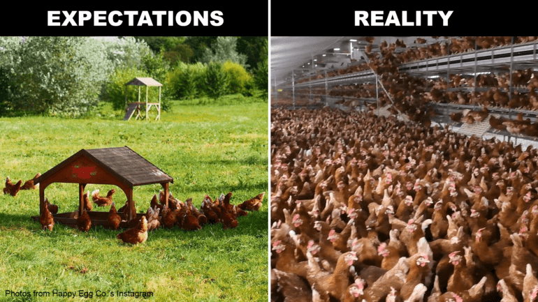 Expectations vs. Reality of chickens on farms supplying the Happy Egg Co