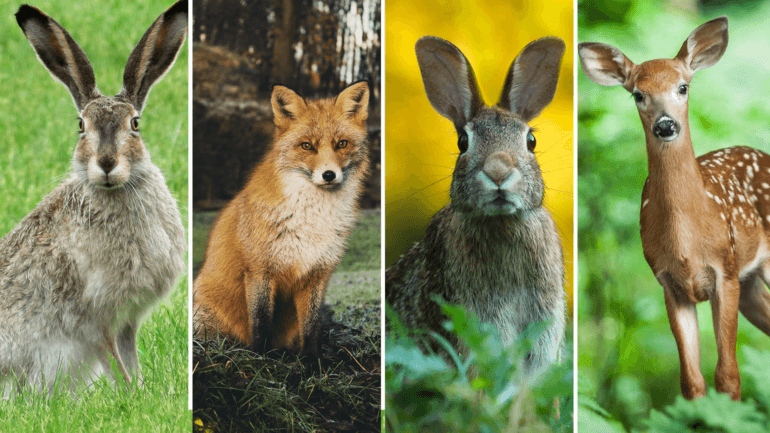 Mammals in the Northern Ireland Hunting with Dogs Consultation