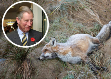 Prince Charles, Stop Using Vile Snare Traps at Sandringham
