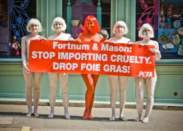 Victory! Fortnum & Mason Bans Foie Gras After Decade-Long Push