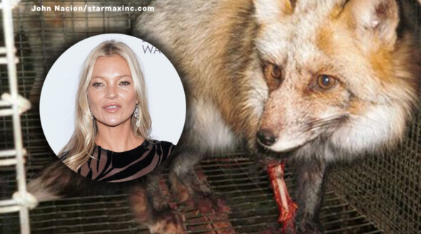 Will Kate Moss Go Fur-Free?